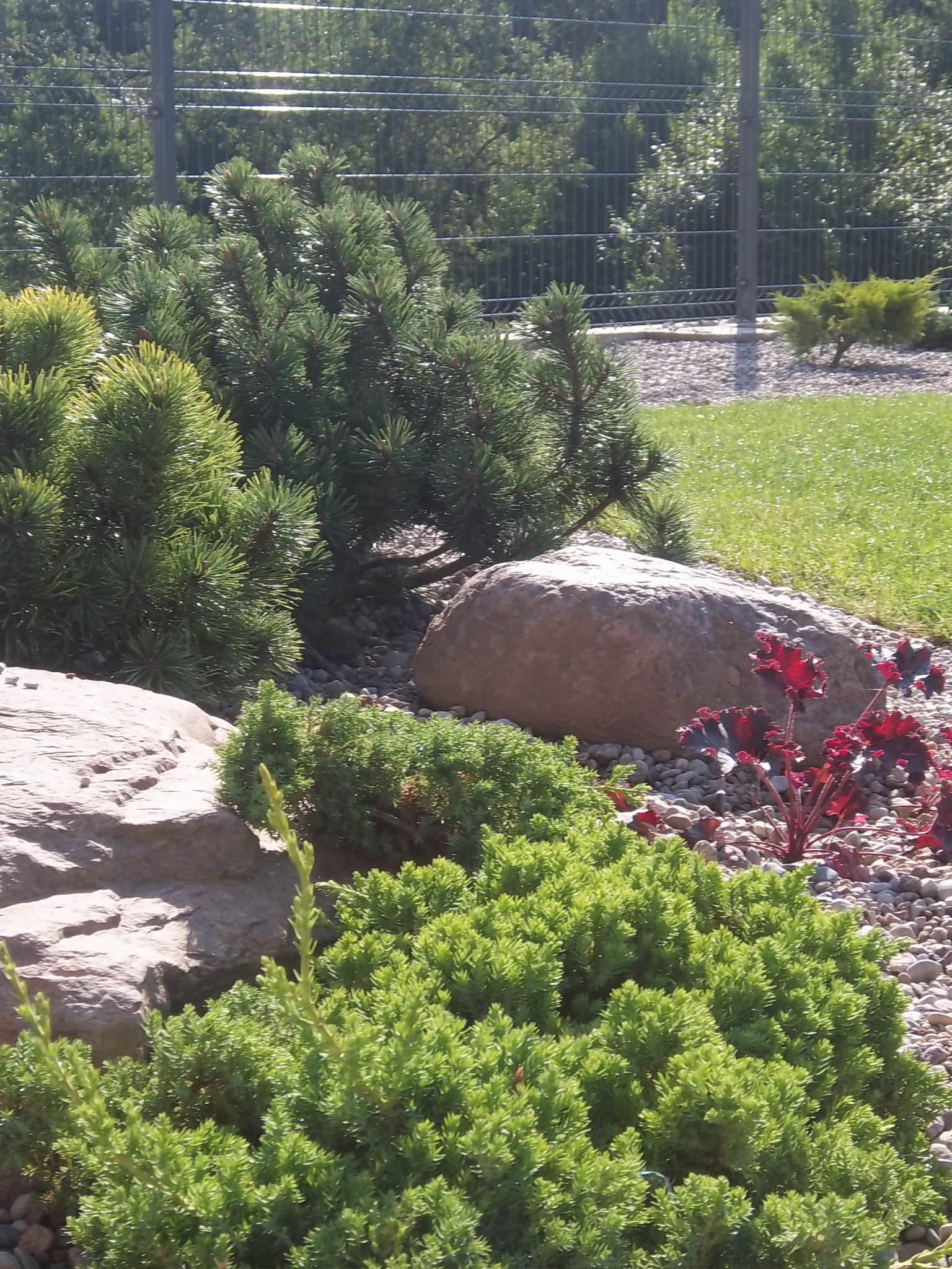 akmenys ir augalai